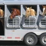 Izaolacje stanowią doskonałe wykończenie samochodów do transportu zwierząt.